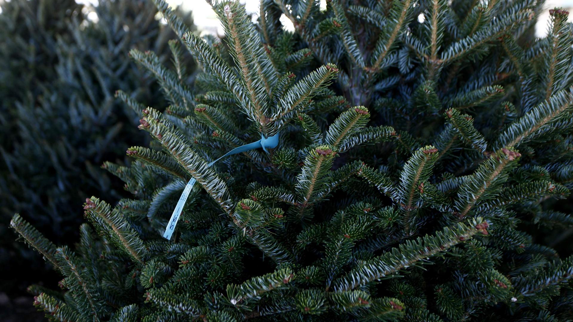 Kerstboomkwekerij Gebr. Vije Enschede