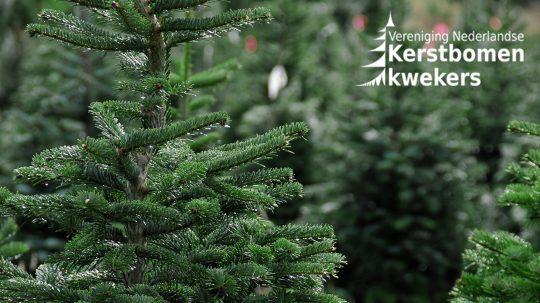 vereniging nederlandse kerstboom kwekers