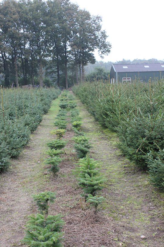 kerstboom kwekerij vije enschede